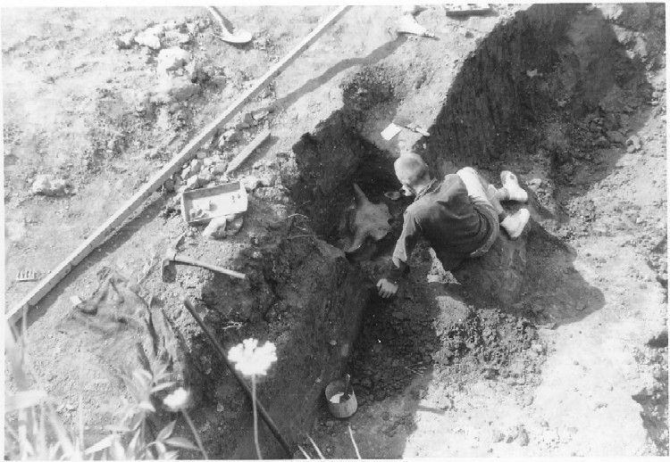 Excavation at Big Bone